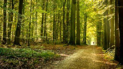 """Schauvliege wil regels in bossen veranderen: """"Bezoekers mogen overal lopen, behalve waar het verboden is"""""""
