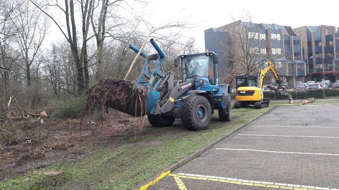 Een boom wordt met kluit gered uit het kapbos aan de Wassenaarweg in Elderveld in Arnhem. De boom wordt later elders terug geplant.