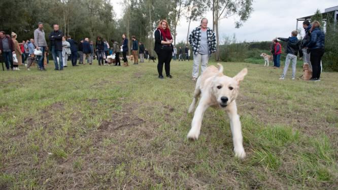 Gemeentebestuur wil (nog) geen hondenweide in Brakel