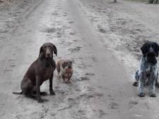 Vlees met punaises gestrooid op populaire wandelroute in Vorden: 'Mijn honden braakten ze gelukkig uit'