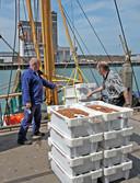 Juni 2009, garnalen op de kade van de vismijn in Breskens. Links vishandelaar Sjaak Merk.