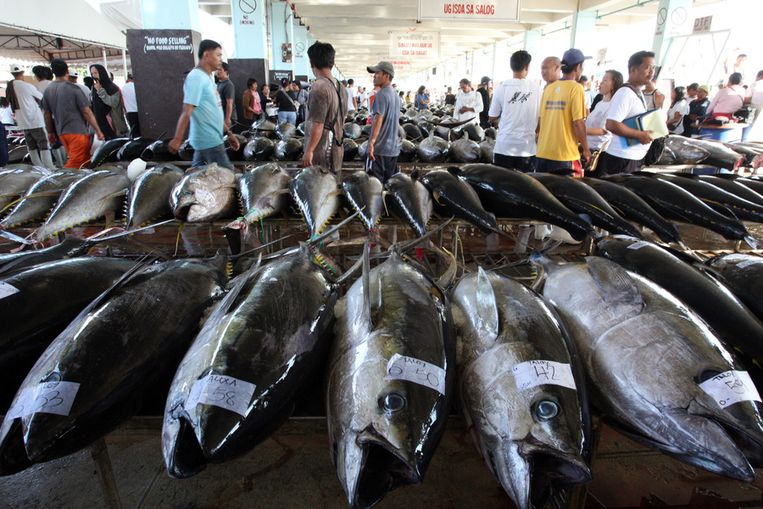 Tonijn op een vismarkt in de Filipijnen. Beeld getty