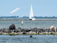 PvdA bezorgd over 'death zone' in Grevelingenmeer