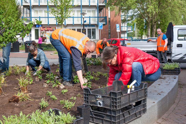 Leden van Stichting Steenbreek zetten zich in om de leefomgeving te vergroenen. Beeld Sjon Heijenga