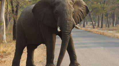 Man verdrijft kudde olifanten: één olifant doodt hem 's nachts in zijn slaap