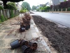 Bewoners van de Adelaar in Oss strijden niet tegen maar juist voor bomen in de straat