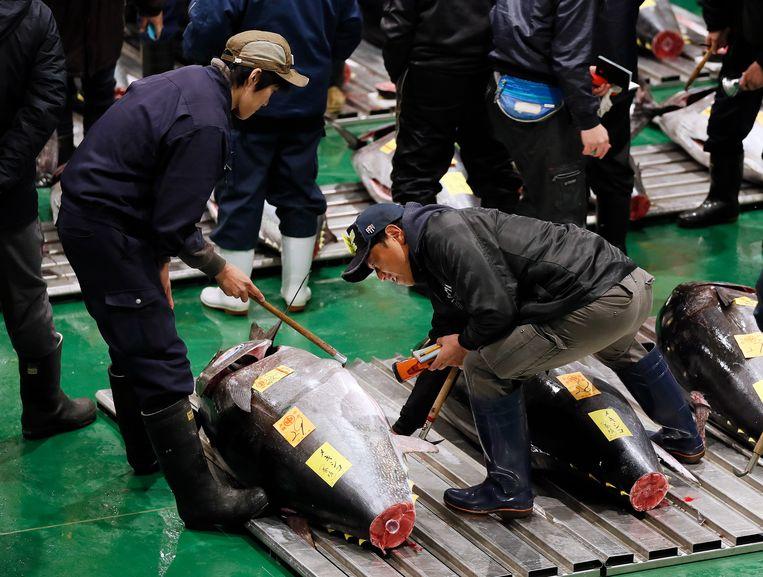 Handelaars onderzoeken de enorme tonijn van 278 kilo op de beroemde vismarkt in Tokyo in Japan. Beeld EPA