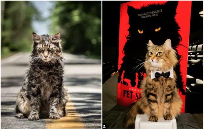 Kat uit 'Pet Sematary' is overleden.