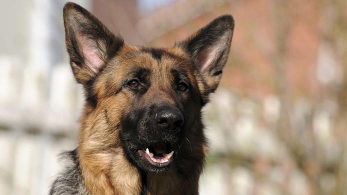 Hondenopvang de Pannehoeve vangt Nederlandse en buitenlandse honden op die in moeilijkheden zitten en/of hulp nodig hebben.
