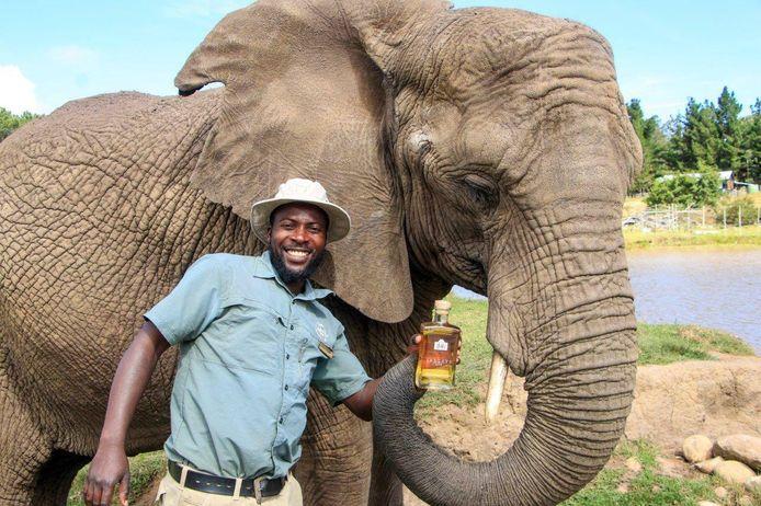 Gin met extract van olifantenmest? Het bestaat en is te krijgen in Zuid-Afrika.