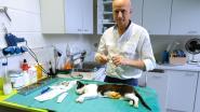 Peer geeft korting voor sterilisatie huiskat
