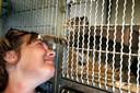 Cora Rikkelman bij een kat in het dierenasiel (archiefbeeld).