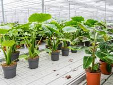 Ook je kamerplanten kun je thuis laten bezorgen: 'Ze zijn veel sterker dan je denkt'