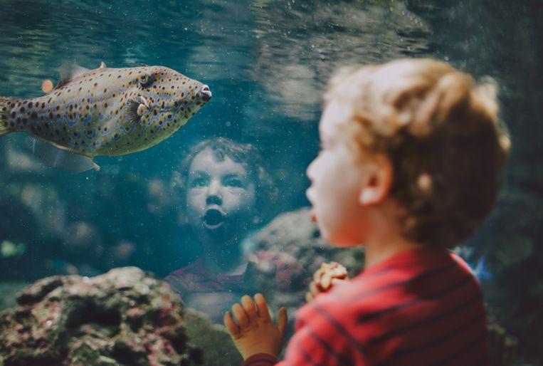 Fien Lindelauff:'We weten wat een mens voor een dier kan voelen, maar hoe zit het andersom?' Beeld Getty Images