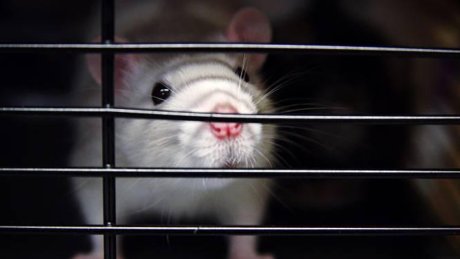 China stopt met verplichte dierproeven op een aantal cosmeticaproducten