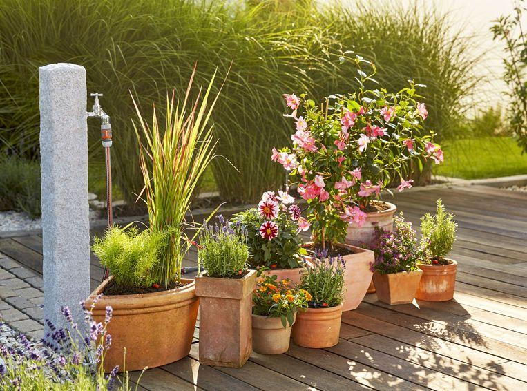 Zo zorg je met een minimum aan water dat je tuin er toch prachtig uitziet.