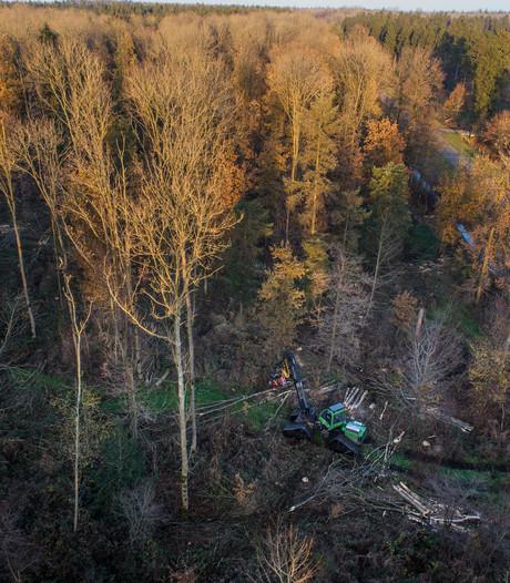 Storm velt 500 bomen in Kuinderbos