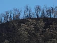Premier Australië: 'Verwijderen vegetatie net zo belangrijk als terugbrengen CO2-uitstoot'