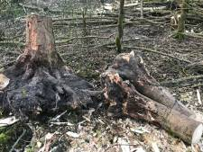 Veel meer bomen gekapt dan bedacht op natuurbegraafplaats: 'Grootste deel is ziek'