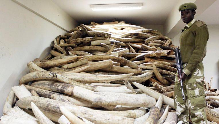 Een Keniase beveiligingsagent voor een partij ivoor dat de afgelopen jaren buit is gemaakt op stropers. Beeld AP