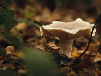 'Speuren naar paddenstoelen' in het Butselbos