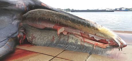 Wachten tot de walvisbuik ploft