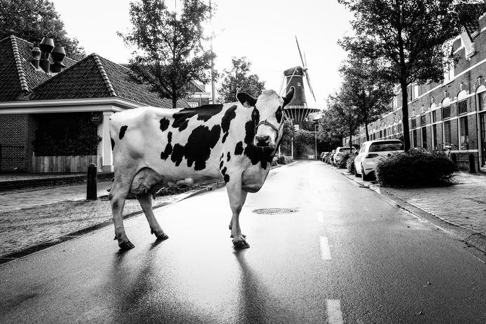 Woerdenaren Mirte Damen en Jessica Rateland bedachten en produceerden samen een Koeiemart-filmpje waarbij koeien in opstand komen, omdat ze bezorgd zijn over het voortbestaan van de Woerdense Koeiemart.