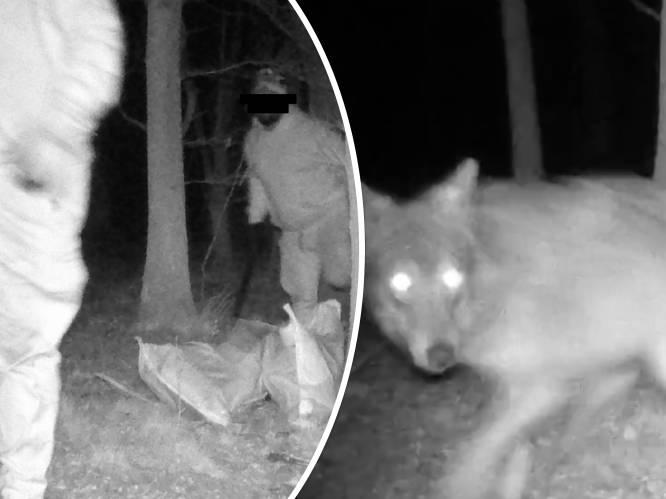 """Wildcamera voor wolven registreert... drie dieven: """"Jammer dat ze niet oog in oog stonden"""""""