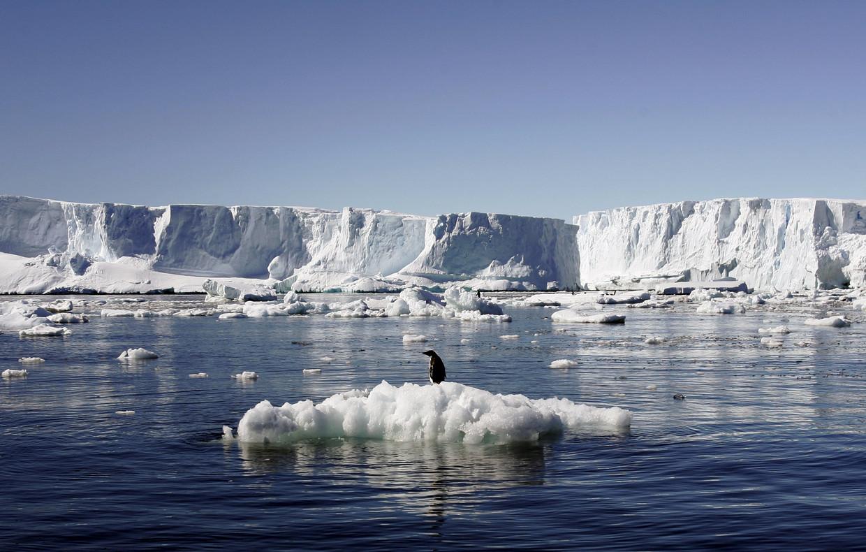 Een Adelie-pinguïn in Oost-Antarctica (januari 2010). Beeld Reuters