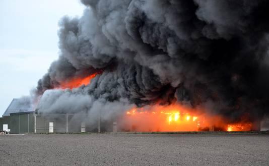 Enorme rookontwikkeling bij grote brand champignonkwekerij in Bavel
