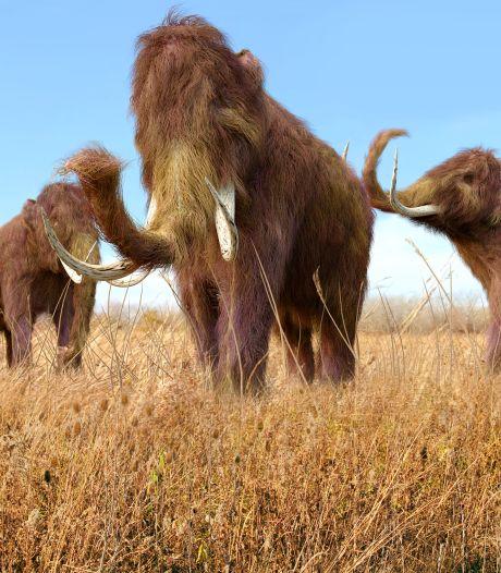 Le plus vieil ADN jamais daté provient d'un mammouth d'1,2 million d'années