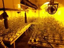 Justitie: Hennepkwekerij in Elburg bracht bijna acht ton op