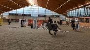 Paard steigert en verliest evenwicht: ruitertje (7) overleden