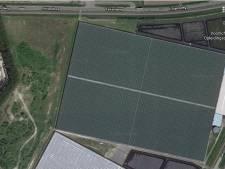 Nog meer aubergines 'made in Westdorpe': glastuinbouwer breidt uit