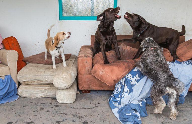 'Je hebt met de hond te maken, maar ook met de baas.' Beeld Dingena Mol