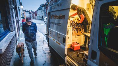 Uniek in Gent en drukbezet: het mobiel kapsalon voor honden