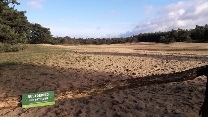 Zandverstuiving Zurenhoek wordt overwoekerd door een soort helmgras als gevolg van verzuring en verdroging. Elk jaar moet het verwijderd worden om het zandverstuivingslandschap te behouden.