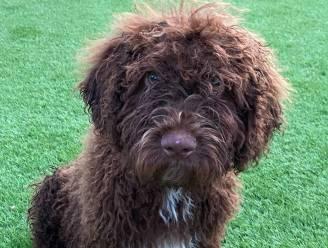 Speciale aanwezige op eerste schooldag bij De Regenboog: Baziel wordt schoolhond die kinderen helpt communiceren