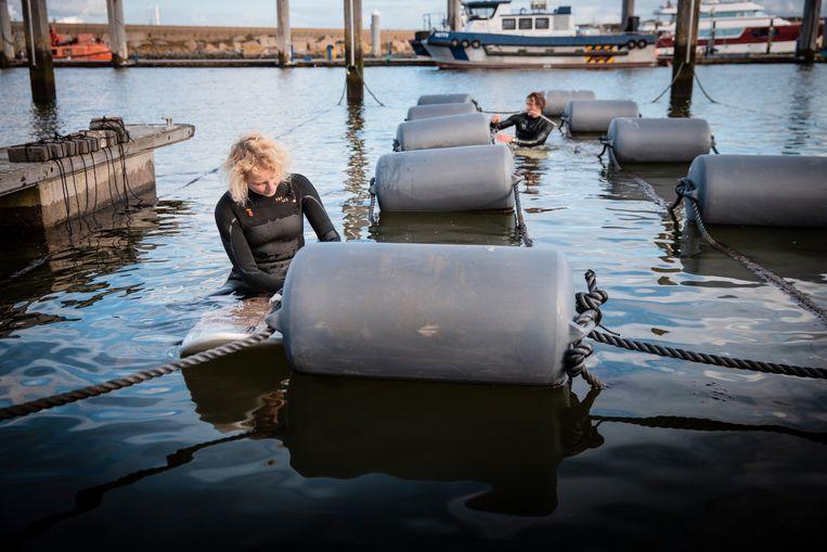 De zeewierboerderijThe Seaweed Farmers van Nikki Spil ligt op de gehuurde ruimte van een botenligplaats in de haven van IJmuiden. Beeld Moceanblue