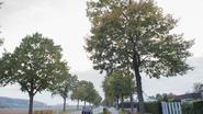 Eiken langs N8 worden niet gekapt