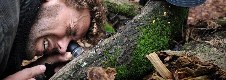 Op zoek naar paddenstoelen Beeld
