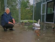 Toekomst wildopvang Delft blijft onzeker
