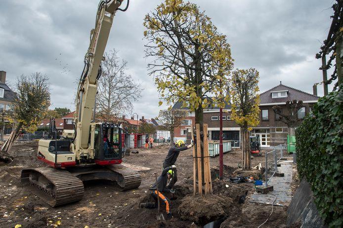 In de gemeente Drimmelen worden soms ook bomen verplaatst, zoals hier bij de herinrichting van het Molenplein eind 2019.