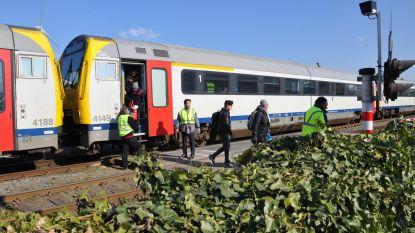Trein ramt wagen die te laat sporen wil oversteken