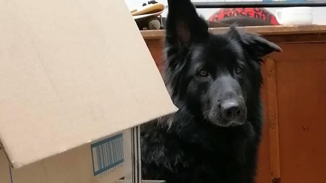 UPDATE: Neisken is terecht Neisken, de hond van kunstenaar Reneisken, is spoorloos. Help jij zoeken?