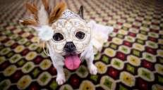 fotoreeks over Honden op de catwalk