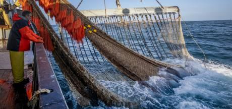 Noordzee wordt steeds warmer: dit zijn de gevolgen voor de visstand