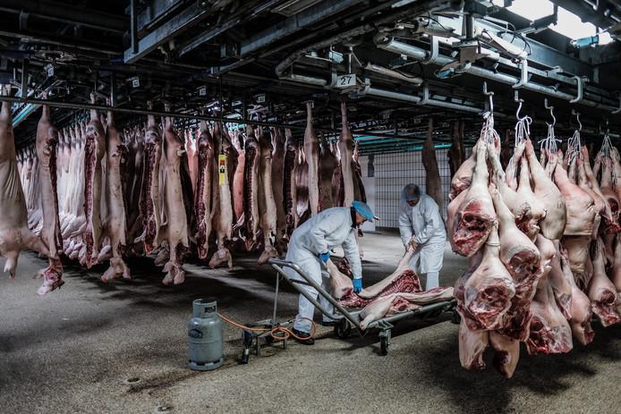 Een geslacht varken dat niet helemaal schoon is, wordt bij Compaxo op een zogeheten ambulance geladen om schoongemaakt te worden, voor het karkas opnieuw het slachtproces in gaat.