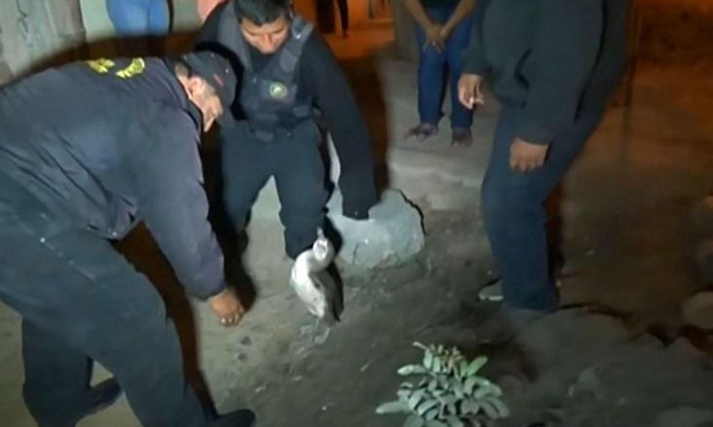 Agenten wisten het dier uiteindelijk te vangen.