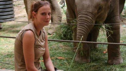"""Verwijten na dood leeuwin Rani doen dierenverzorgster Planckendael pijn: """"Dit is voor ons ook een enorme last om dragen"""""""